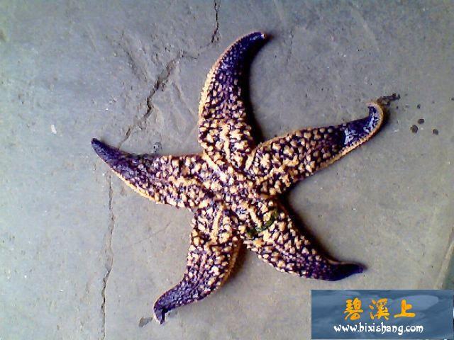 【原创】0508海钓:没有黑鲷有海星