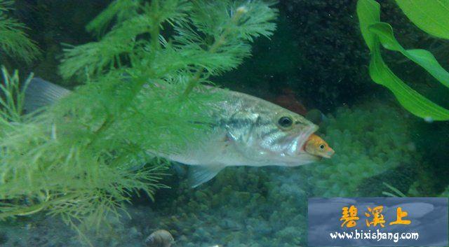 壁纸 动物 海底 海底世界 海洋馆 水族馆 鱼 鱼类 640_353