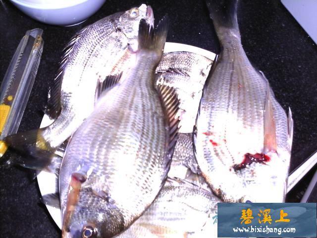 【原创钓鱼记事】海钓远投:海鲋9条