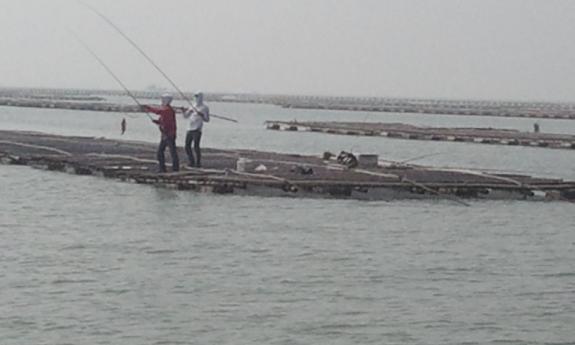 钓法:用生虾沉底钓