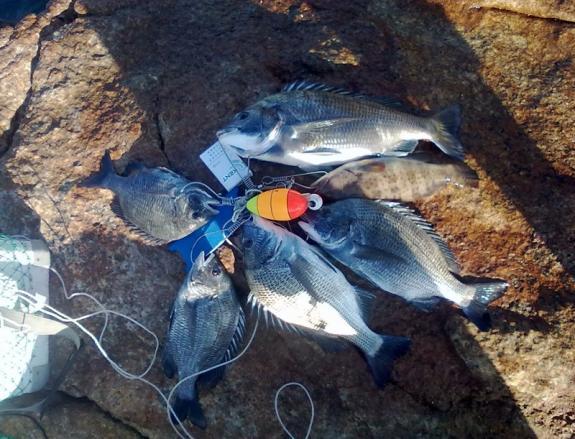 钓点:荷包岛猪肉